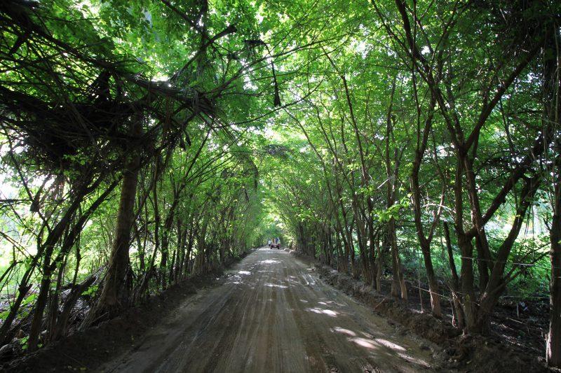 Túnel Verde, em Porto de Pedras (Alagoas)