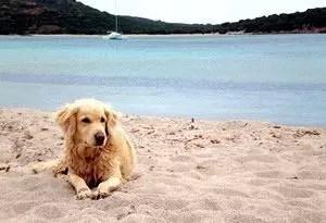 Spiagge per cani in Italia e all'estero, eccole qui