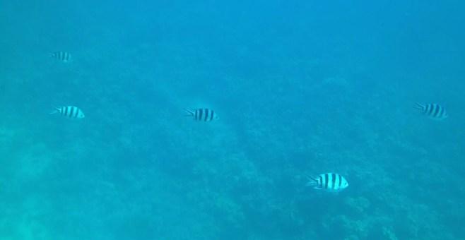Makadi Discovery, escursione in barca a Hurghada