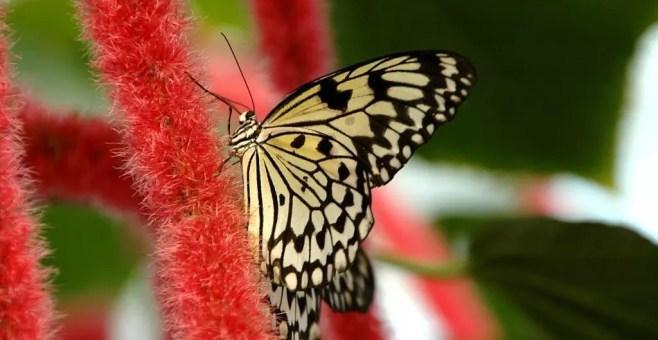 20.000 specie di farfalle a Benalmadena Pueblo, Malaga