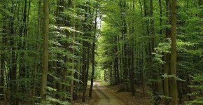 Foresta Nera in Germania