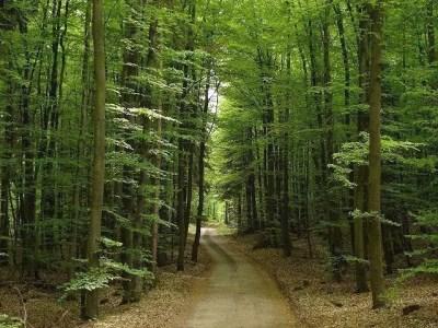 foresta-nera