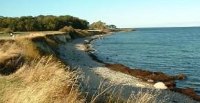 Fehmarn, l'isola dei conigli selvatici