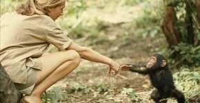 """""""La Grande Avventura"""", mostra National Geographic Roma"""