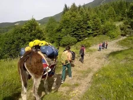 Vacanza con l'asino: l'Ostello dei Balocchi a Reggio Emilia