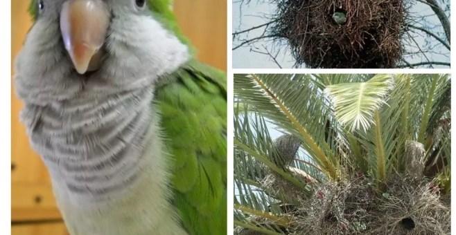 Molfetta, la città dei pappagalli