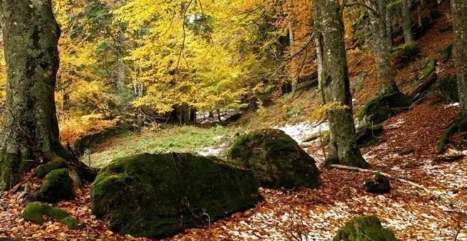 Foreste Casentinesi, da rifugio a rifugio