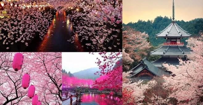 In Giappone con Dodake, le date 2015