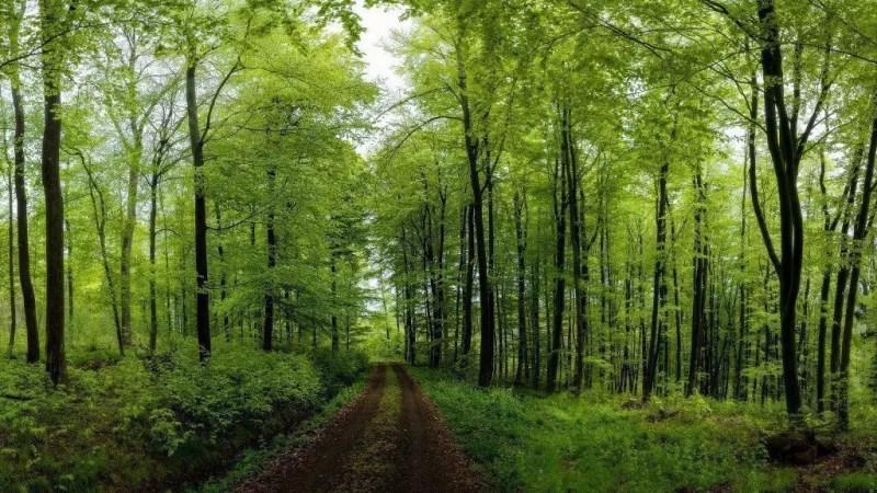 Assia_trail_boschi
