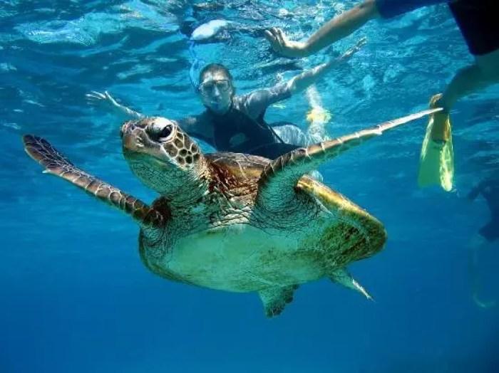 australia-coral-bay
