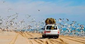 Oman on the road: 5 cose fuori dagli schemi