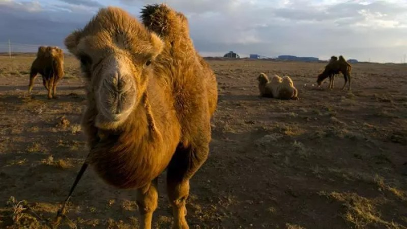 mongolia-gobi-deserto
