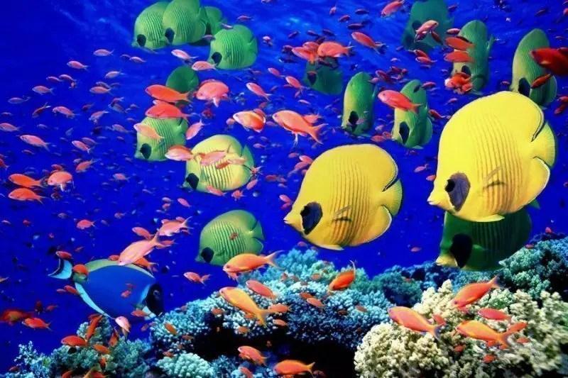 maldive-barriera-corallina