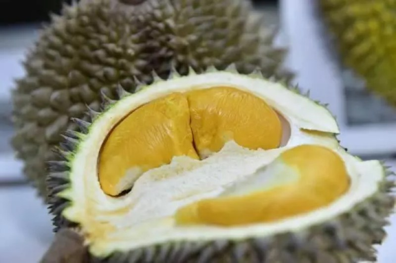 singapore-durian