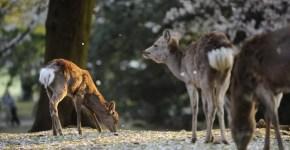 Nara: 4 attrazioni da non perdere