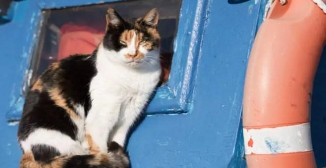 Catboat di Amsterdam: rifugio galleggiante per gatti randagi