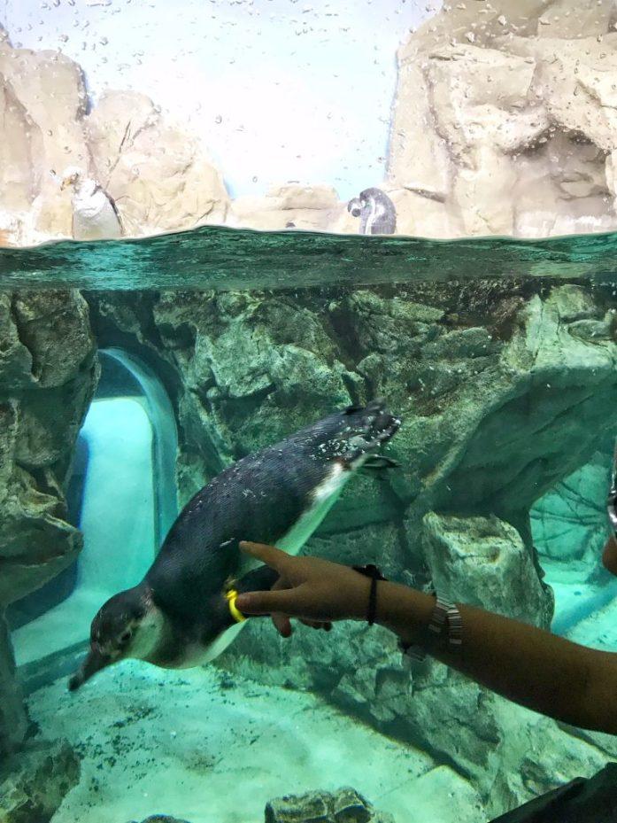 pinguini acquario
