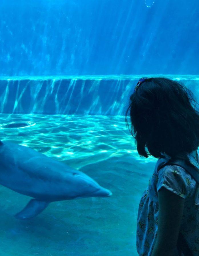 delfino acquario