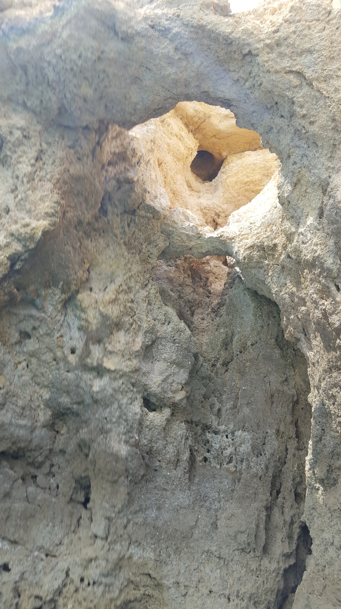 costa algarve roccia falesie