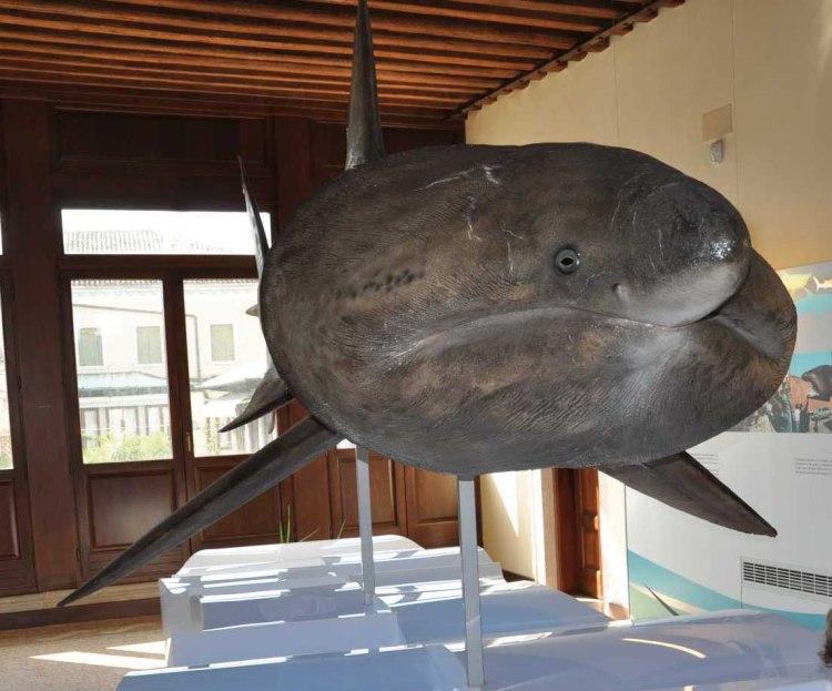 Museo di Zoologia Adriatica Giuseppe Olivi
