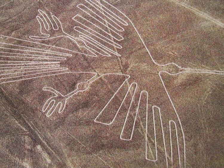 il condor figura delle Linee di Nazca