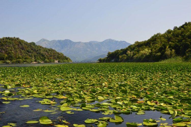 la flora del Lago di Scutari