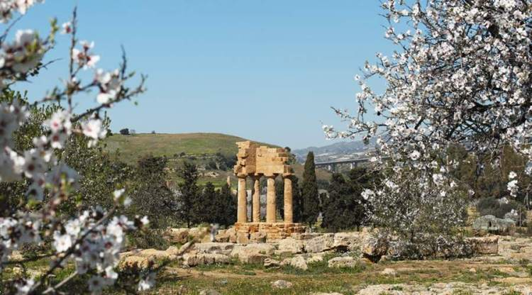 il paesaggio della valle dei templi con il mandorlo in fiore