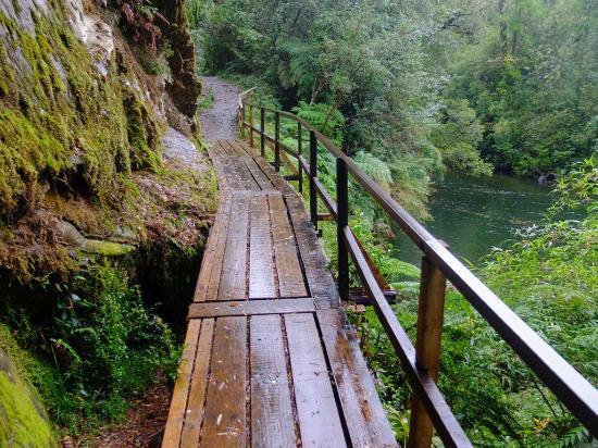 un sentiero tra i larici millenari del parco nazionale alerce andino