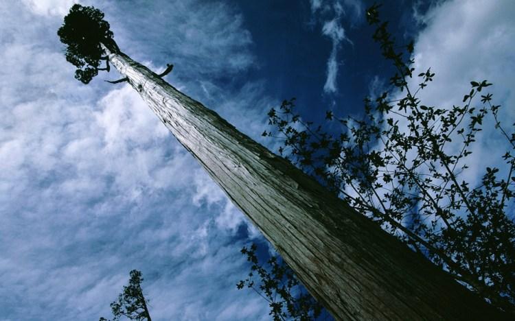 il parco nazionale pumalín douglas tompkins