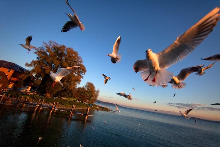 in volo sul lago di costanza