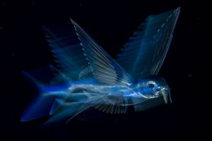 Night Fly Wildlife Photographer of the Year