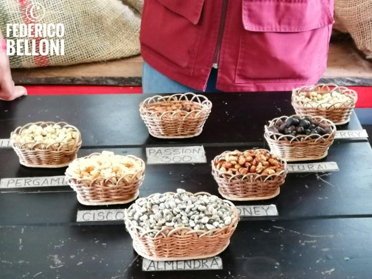 le varietà di caffè prodotte dalla hacienda ocaso a salento