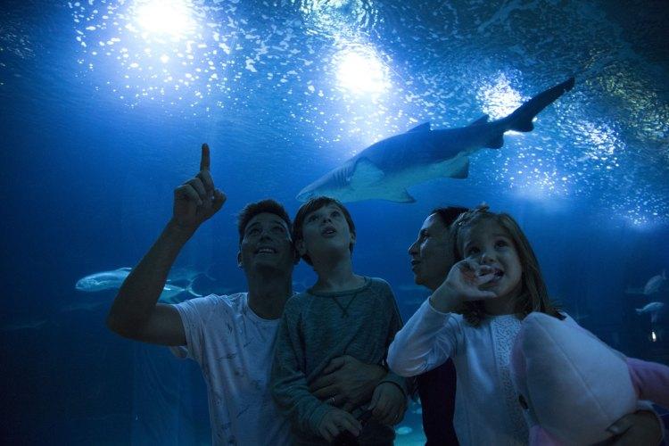 una famiglia osserva gli squali dal tunnel dell'acquario di valencia