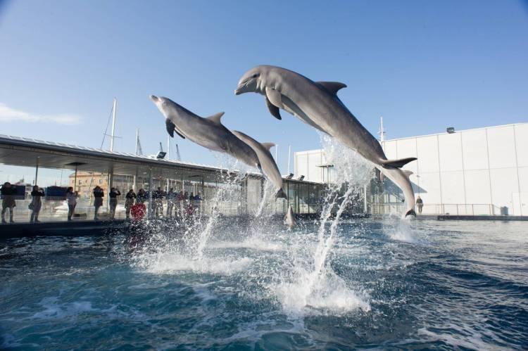 salti di delfini ospitati nell'acquario di genova all'interno del porto antico