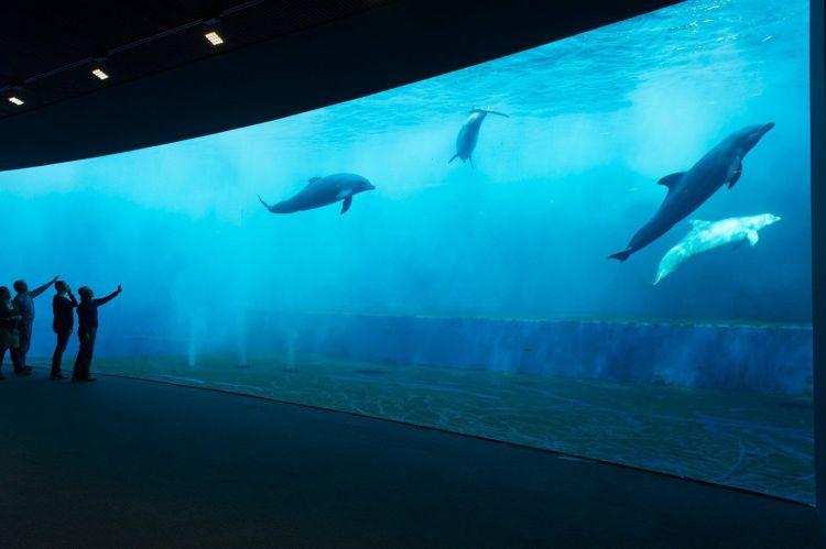 una delle vasche dei cetacei dell'acquario di genova nel porto antico