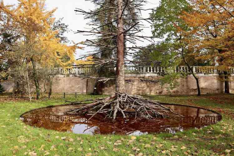 l'installazione radici al vento testa nella terra all'orto botanico di padova