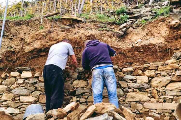 i muretti a secco dei terrazzamenti delle cinque terre