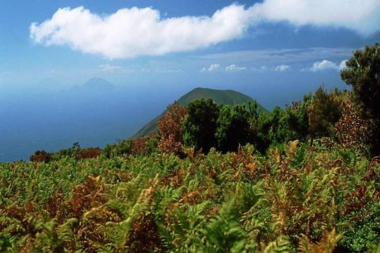la distesa di felci sui pendii del monte fossa delle felci a salina isole eolie