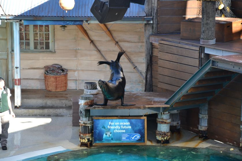 Spettacolo Foche Taronga Zoo Sydney