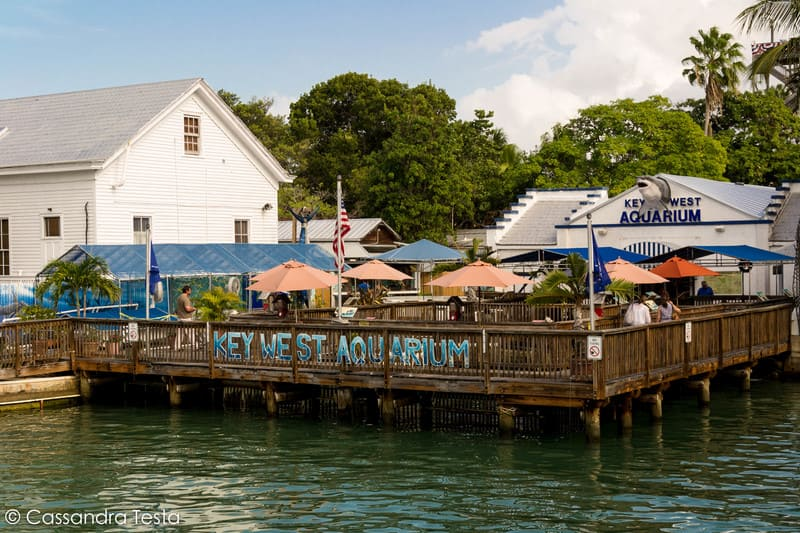Key West Acquarium