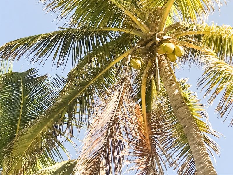 Le palme di Isla Contoy