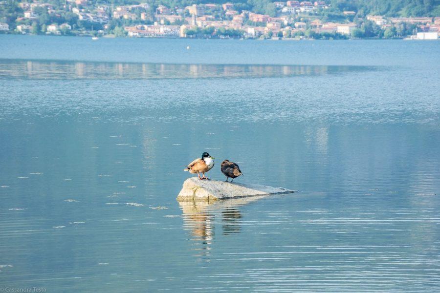 Fauna Lago di Pusiano