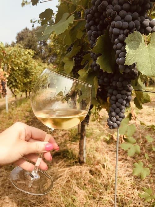 Vino bianco di Cascina Piano