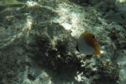 port launay mahe seychelles snorkeling
