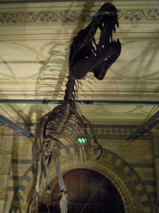 londra natural history museum