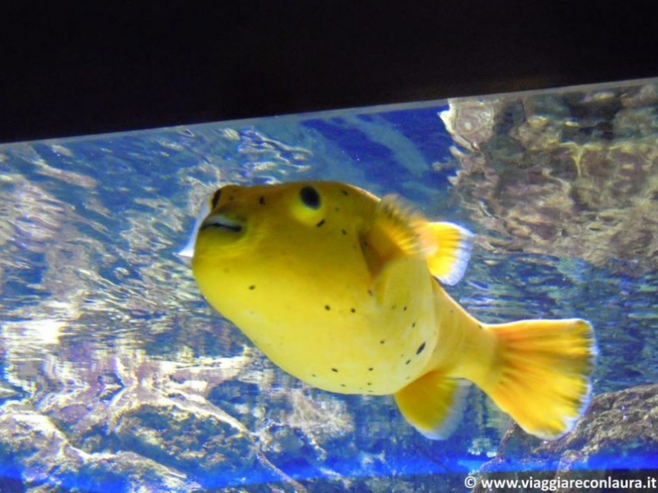 istanbul-cosa-vedere-6-giorni-acquario