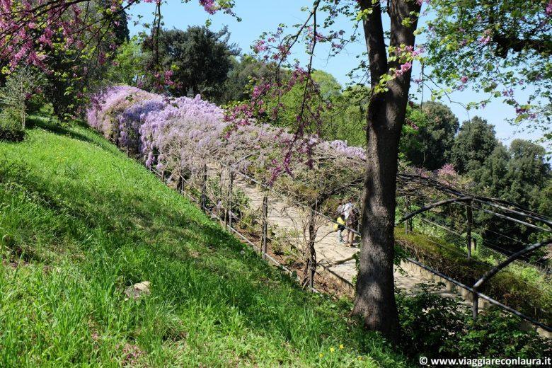 villa giardino bardini firenze galleria glicine