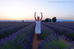 campi di lavanda valensole provenza