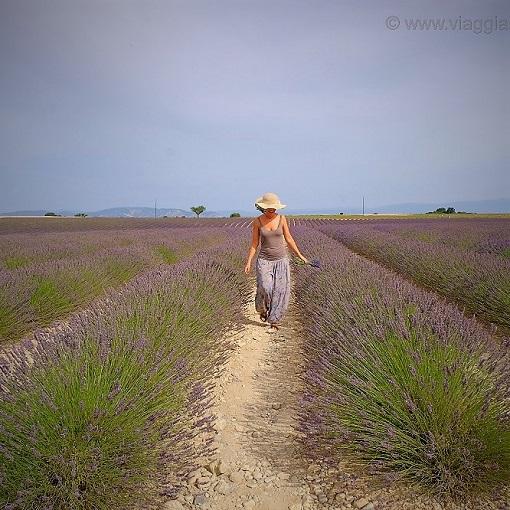Itinerari della lavanda in Provenza, 3 giorni immersi nel viola
