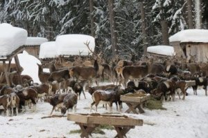 wild animal feeding zell am see